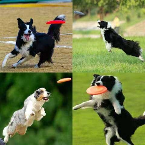 Dog Flying Disc1