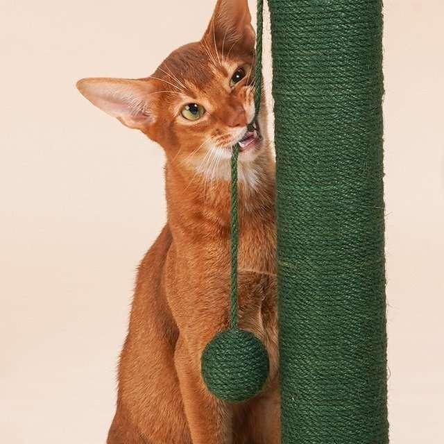 cactus cat scratching post4