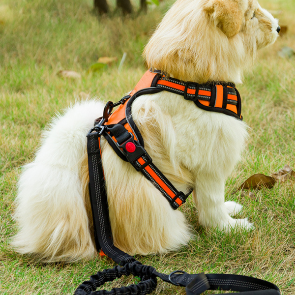 dog chest harness4